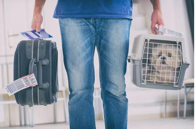 Pet Moves Services